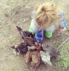 feeding the chooks