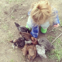 Keeping Chickens - Building a Chicken Coop