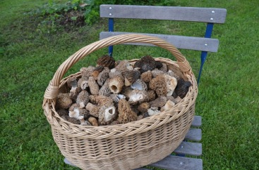 basketmorels