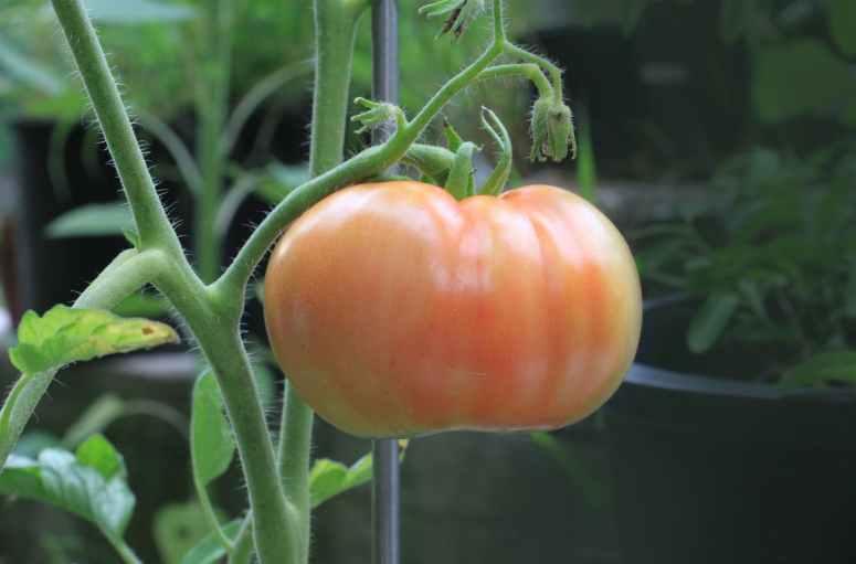 Seed- Saving | Home Love |